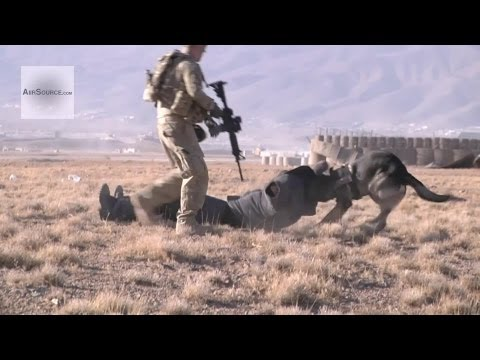 Military Working Dogs: K9 Drug/Vehicle Search