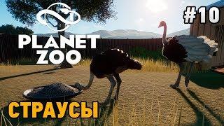 Planet Zoo страусы  #10 Страусы