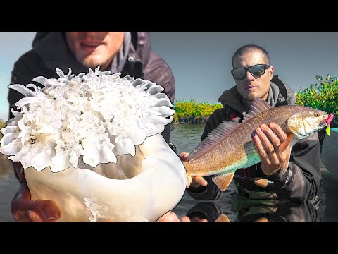 Sightcasting Redfish And Jellyfish Catch And Cook