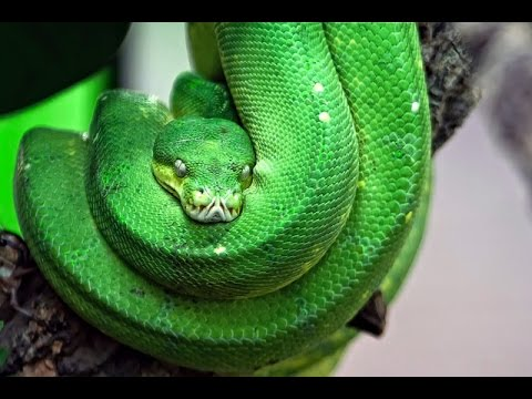 Deadliest Animals: Amazon (Documentary)