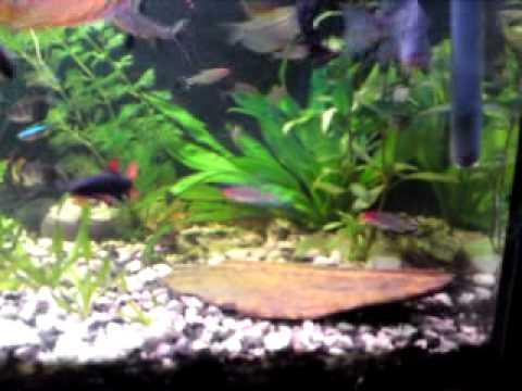 Akvárium 110 L .MP4