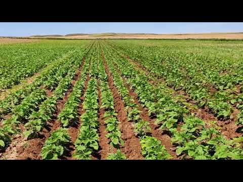 ¿Quién es una AGRICULTORA o AGRICULTOR GENUINO ?