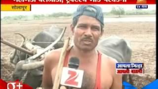 Solapur | Buffalo Replace On | Bullock For Farming