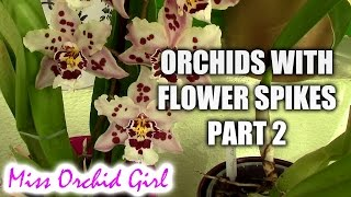 Orchids with flower spikes - General and specific tips Pt. 2