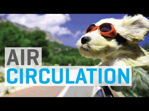 Air circulation in the indoor garden grow room youtube for Air circulation in a room