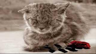 Грустная песня про кота который любил детей(Грустная песня про бездомного кота который любил детей., 2015-10-23T17:27:27.000Z)