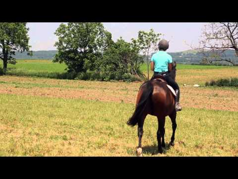 How To Steer A Horse While Riding