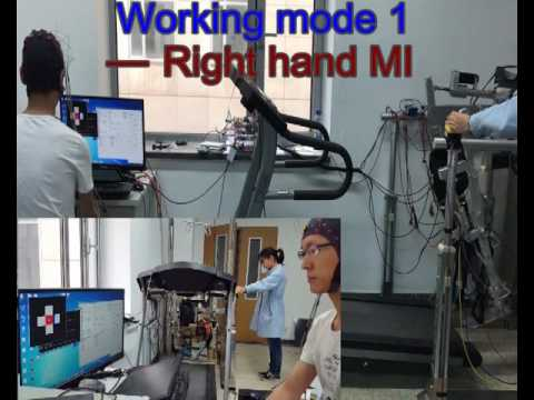 A brain controlled lower limb exoskeleton for human gait training