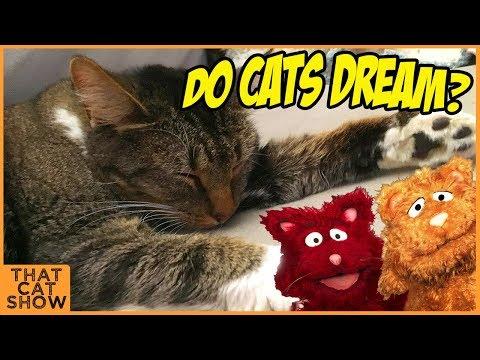 Do Cats Dream - Cat Videos - Cat Questions - That Cat Show