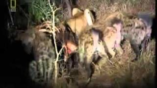 Repeat youtube video THE GIOI DONG VAT-linh cau tan cong su tu de tranh an.flv.mp4