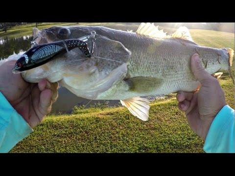 Bank Fishing Ponds - Whopper Plopper Topwater Blowups!