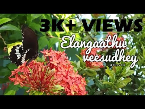 Elangaathu Veesudhey Dance Cover (For Best Sound Effect Use Head Phones)