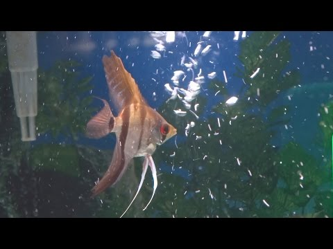 Fish Playing + Attacking Bubbles