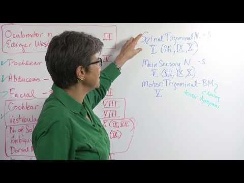 5.5 Cranial Nerves: Nuclei