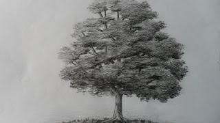 Como dibujar un árbol paso a paso, bien fácil. Bases para aprender a dibujar un arbolito clásico.
