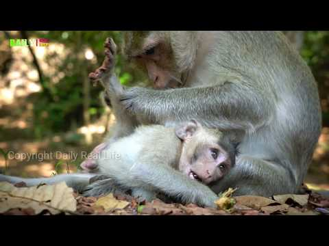 Most Amazing monkeys funny with Group - Easy tourist feed lotus for Babies Monkey in Bayon temple