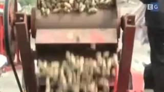 Станок для очистки арахиса