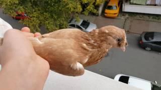Güvercinimizi Çatıya Attık ;)