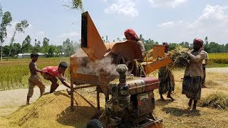 Amazing Paddy Thresher Machine in Village || Rice Harvester
