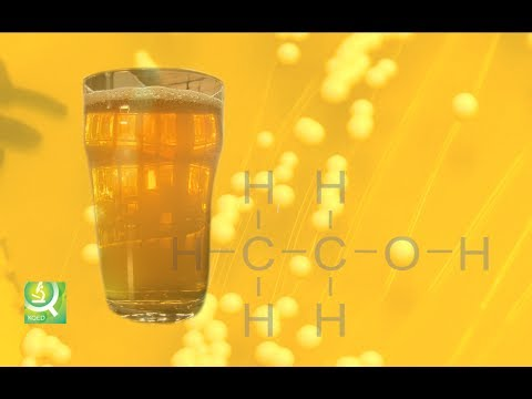 """Thumbnail for the embedded element """"Science of Beer: Tapping the Power of Brewer's Yeast"""""""