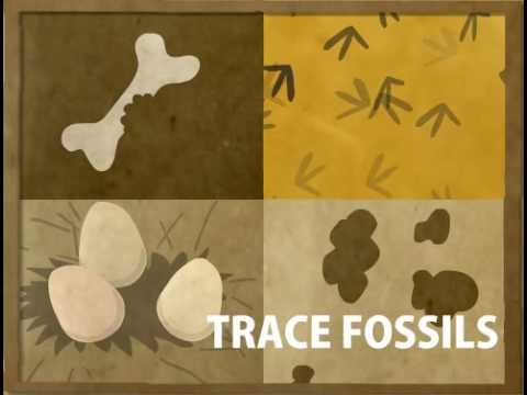 How Fossils Are Formed - YouTube