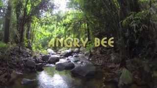 Angry Bee :)