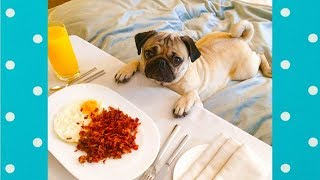 Funny Sleeping Dogs Reaction When Smell Food | Funny Pets Video