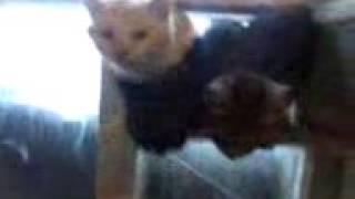 Коты атакуют. Смешное Видео про котов. Cats attack. Funny video about cats.