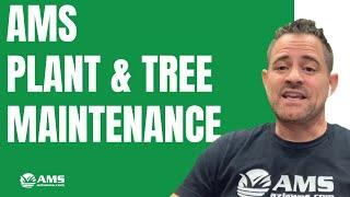 AMS Plant & Tree Maintenance