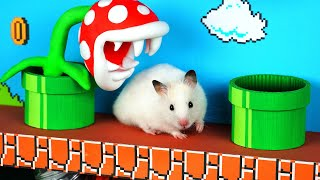 Super Mario Hamster Bros. – Cute Hamster Marshmallow vs Highest Level Super Mario Maze