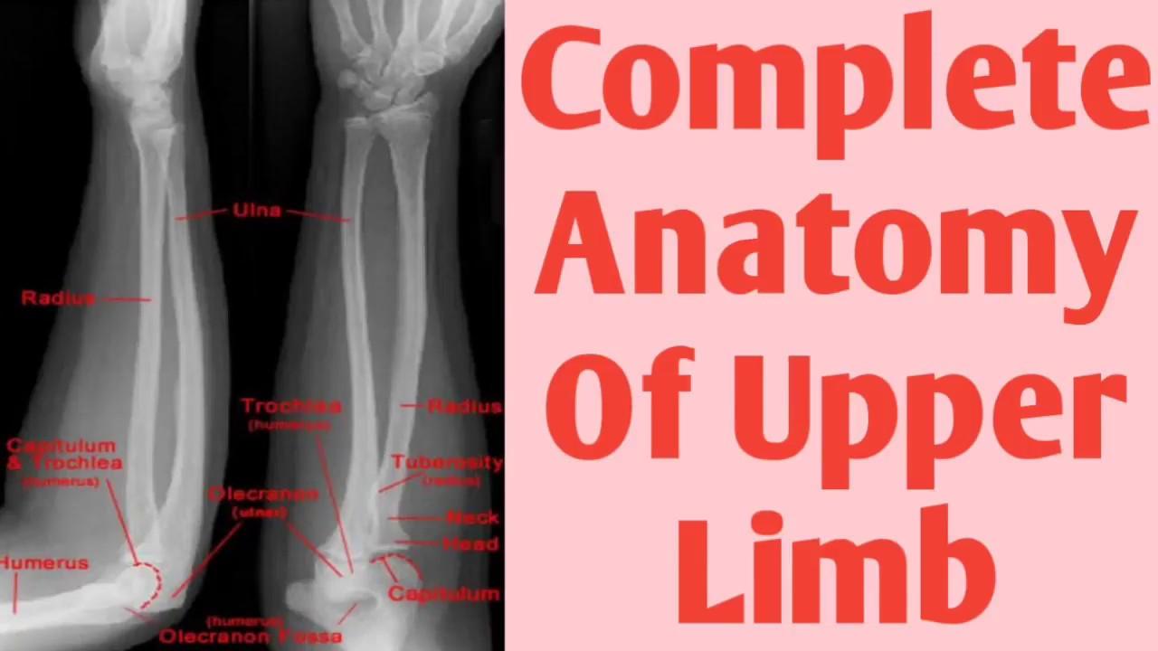 X-ray Upper limb anatomy X-ray humorous, elbow, forearm, hand ...