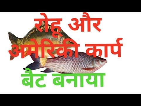 Best Carp Baits - How To Catch Carp With Different Baits  (Hindi Dubbing)
