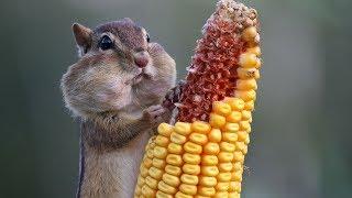 Как едят животные протсо ржака