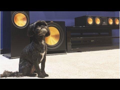 cute-dog-+-klipsch-home-theater-w/-rf-7-iii-rc-64-iii-r-115sw-85-inch-sony-4k-tv