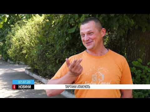 ТРК ВіККА: Чорні таргани окупували кілька будинків на Митниці