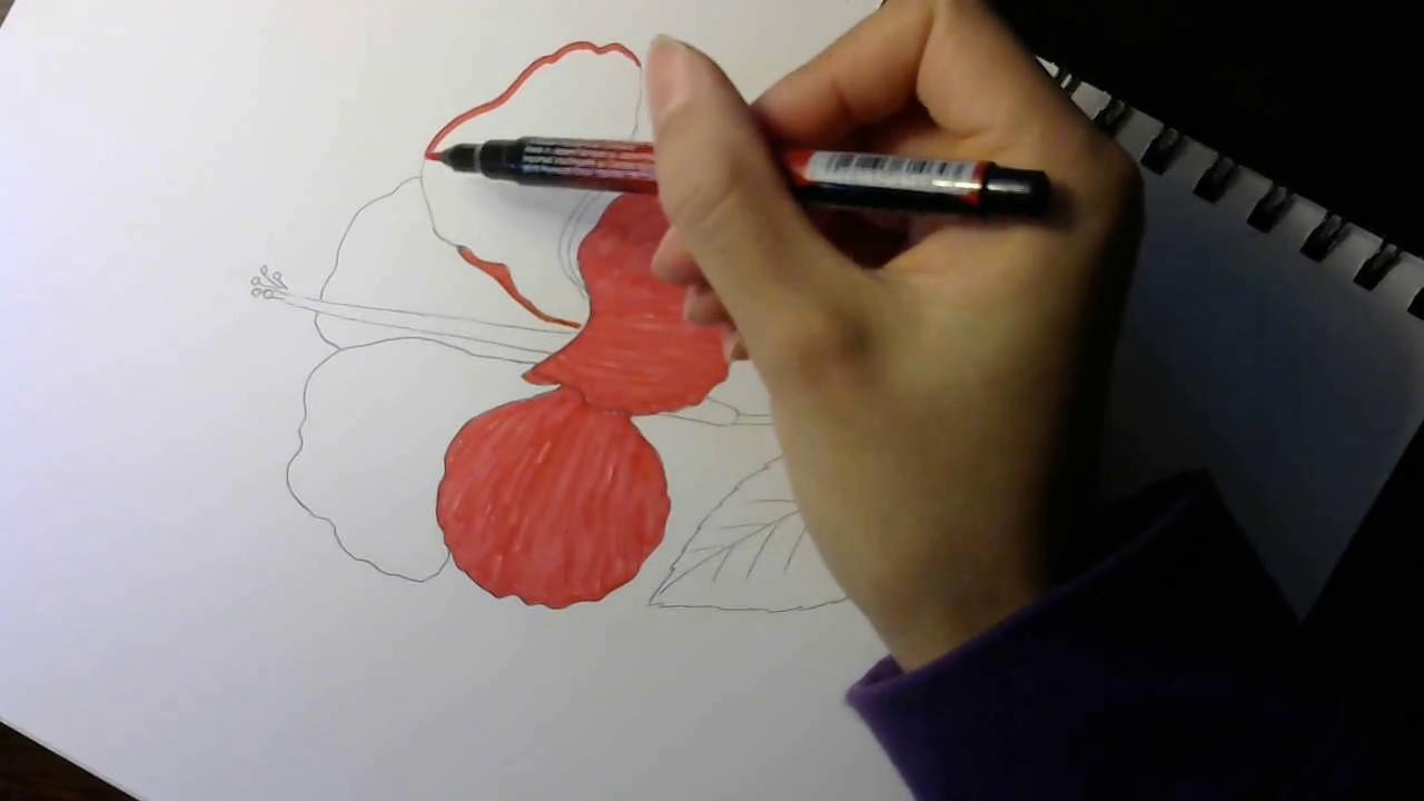 Cách vẽ hoa dâm bụt – How to draw hibiscus: step by step tutorial