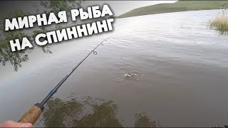Рыбалка на спиннинг Отводной поводок на мирную рыбу Ловлю подлещика сорогу окуня уклейку и карася