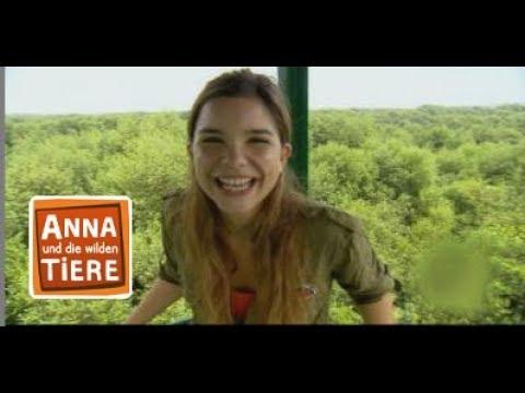 Die Verruckte Welt Der Mangroven Doku Reportage Fur Kinder Anna Und Die Wilden Tiere Youtube