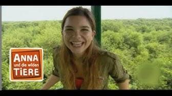 Die verrückte Welt der Mangroven (Doku) | Reportage für Kinder | Anna und die wilden Tiere