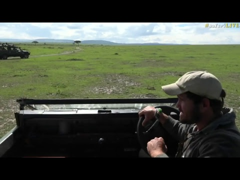safariLIVE - Sunrise Safari - Nov. 13, 2017