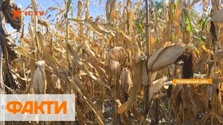 Рейды на Полтавщине: кто и почему у фермеров отбирает урожай
