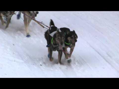 Iditarod 2011-Corral Hill---Jessie Royer