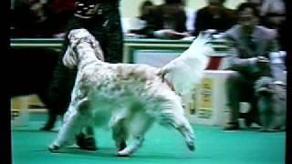 11年前のアジアインターナショナルドッグショー。 13才で亡くなったグレ...
