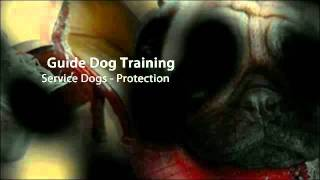 Dog Training Chula Vista, Ca Dog Obedience Dog Trainers