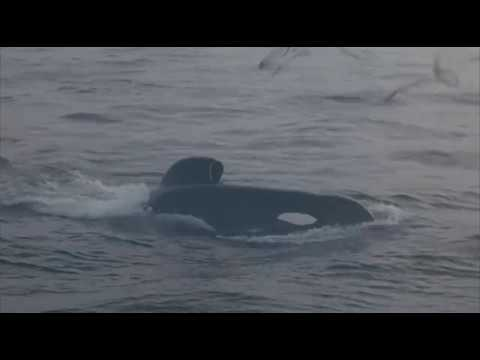 Free Willy 3: The Rescue 1997 - 123movies