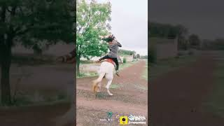 Horse clip for whatsapp status