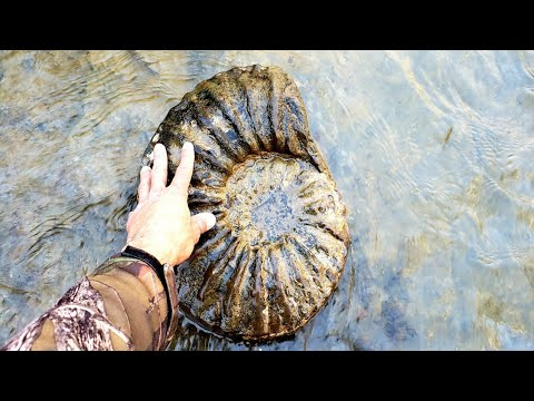 AMAZING~Once In A Lifetime AMMONITES & MATRIX FOUND..!!