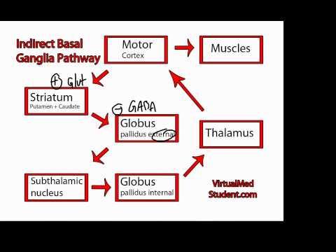 Basal Ganglia Indirect Pathway