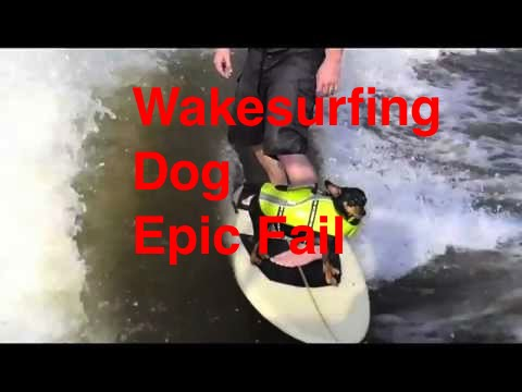Wake Surfing Dog - Epic Fail - Funny Chihuahua on Surf board