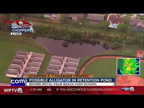 Royal Palm Beach High School students moved after report of alligator near portable classrooms